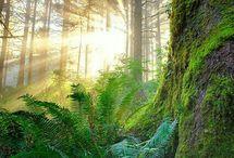 Wald mystisch der klang herrlich süß