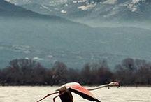 ΦΡΑΓΜΑ ΛΙΘΟΤΟΠΟΥ ΛΙΜΝΗΣ ΚΕΡΚΙΝΗΣ / Ένας νέος χώρος στο διαδίκτυο για την καλύτερη προβολή ενός ευλογημένου τόπου, της λίμνης Κερκίνης. Πληροφορηθείτε τα νέα, αλλά και να γνωρίσετε της ομορφιές αυτού του τόπου μέσα από φωτογραφίες, βίντεο και κείμενα. Η πλούσια φυσική ομορφιά γύρω από το γραφικό λιμανάκι του Λιθοτόπου, πηγή δημιουργίας και έμπνευσης, προσφέρει στιγμές χαλάρωσης στον επισκέπτη.