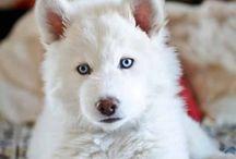 those eyes<3