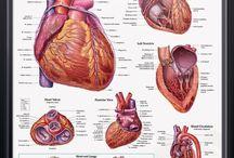 Cardiologi