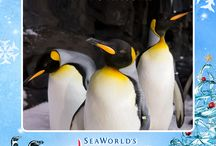 Holiday E-Cards - SeaWorld Style! / Looking for the perfect greeting to share with friends and family? We have an awesome collection of animal e-cards that are sure to put a smile on anyone's face!