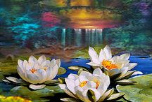 Waterlily inspiration