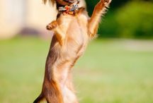 Dancing Dogs / Bring a smile to your face with a dancing dog.