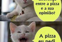 O Gato engraçado