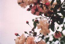 Giardini / Bouquet