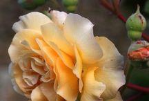 flori color