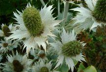 Intermediaire planten tuin