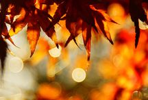 I love Fall  / by Amanda