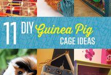 Rodney the guinea pig! / by Emily Blessinger