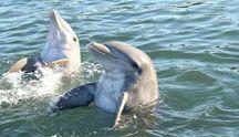 Mayavision Tours Excursiones Nado con Delfines