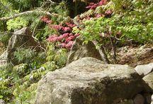 Stone garden ideas
