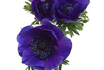 Purple Flowers / Purple flowers that we love / by BloomsByTheBox.com
