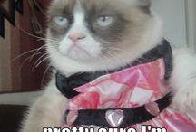 #GrumpyCat #funnies