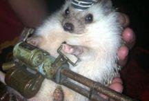 Hedgehog fashion / Duże ilości naraz jeży
