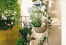 Gardening / Gardening Mania I am.