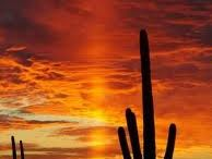 Tucson / by Jeanette Wah-Duffy