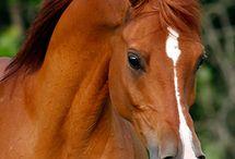 Koně :)