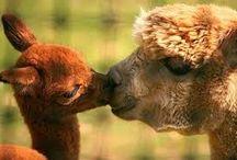 ♥FUNNY ANIMALS♥☺ ♥ΑΣΤΕΙΑ ΖΩΑΚΙΑ♥ / ♥Δεν είμαστε πιο έξυπνοι από τα ζώα, απλά δεν τα καταλαβαίνουμε.♥