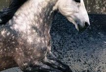 Equine Interests
