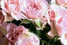 Rose / Rose solo Rose