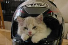 Cats in Helmets / Just Cats in Helmets.