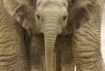Elephants <3 / Uhh...elephants / by Julia Irys