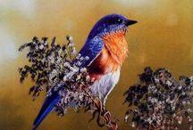 Birds local