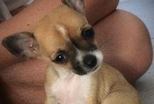 Belle : cute !!