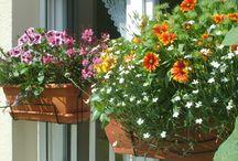Балконные цветы the flowers on the balcony