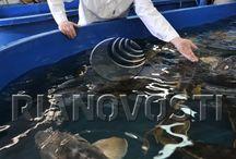 Рыба выставка
