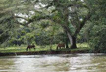 Costa Rican reissu 2015 / Maisemakuvia yms.luonnon kauniista Costa Ricasta, josta lähes neljännes on luonnospuistoja tms.