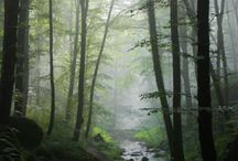 Beautiful places / by Misty McLendon