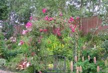 gardens / my lovey garden , allways looking for new ideas