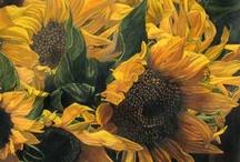 Sunflower inspirations / for tattoo / by Eira Braun-Labossiere
