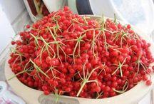Viburnum Opulus/ Gilaburu Kayseri Turkey