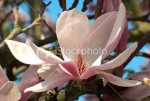"Tree Photos - LinieLux / Microstock photos from LinieLux - motif ""trees""."