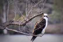 Wildlife at the lake.