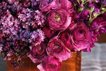 kvety, flowers