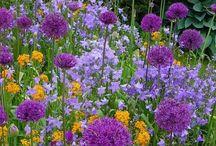 Dans un grand champs de fleurs...
