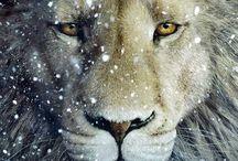 Narnia / Peter Pevensie