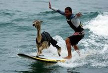 surfing / funny surfing