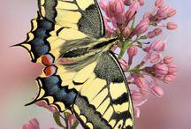 fluturi / butterfly