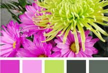 Color Palette / by Desiree Dickens