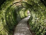 W ogrodzie / Projektujemy piękny ogród