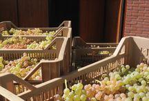 fine taste from Verona & Garda Lake / food wine & gourmet from Romeo & Juliet city