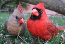 [The Cardinals] / by Kara Cardinal