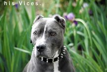 We Love Pit Bulls / We have a special passion for this misunderstood breed - so we wanted to offer them a special board!