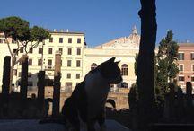 Plein Air Roma, Italia - Rome, Italy / Plein Air Painting, Study Abroad, Best of Life,