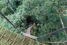 The Original Canopy Tour - Monteverde