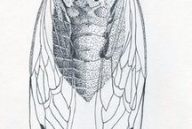 Anatomical drawings of insects.
